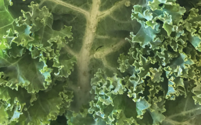 Why Should I Eat Kale? Health Benefits & Recipes For The Plant With The Worst Reputation